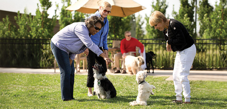 women playing with dogs